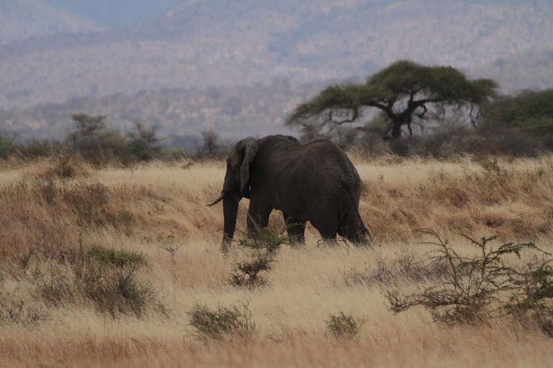 Tanzanie-Photo David Noir