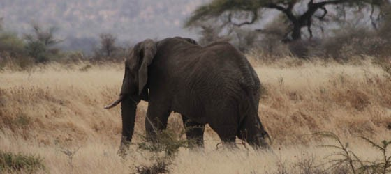 Tanzanie - Photo David Noir